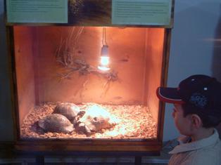 Exotarium: Exotic animals' zoo in Yerevan
